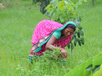 पारिवारिक निजी वन किसानलाई अधिकार दिने कानुनी व्यवस्थामा सरकारको कन्जुस्याई